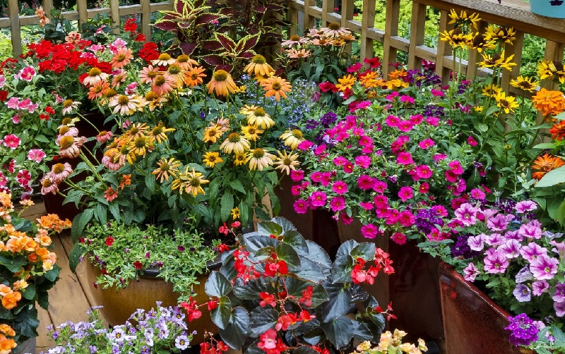 Fleurs retombantes